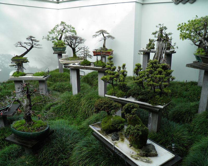 Two initial steps how to design a garden with bonsai for Bonsai de jardin
