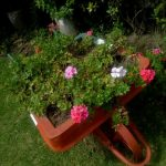 Gardening tips in summer