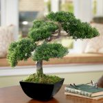 Indoor bonsai care